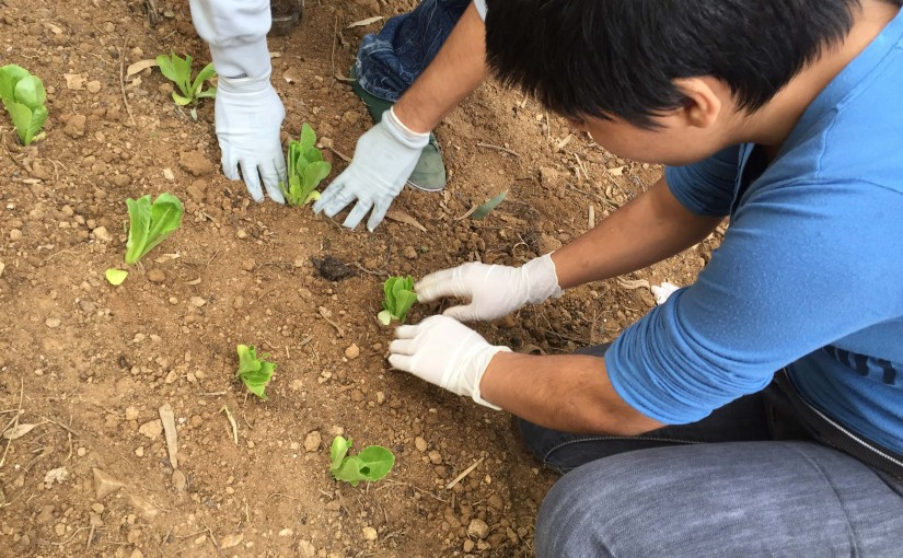 Φύτευση λαχανικών στον κήπο